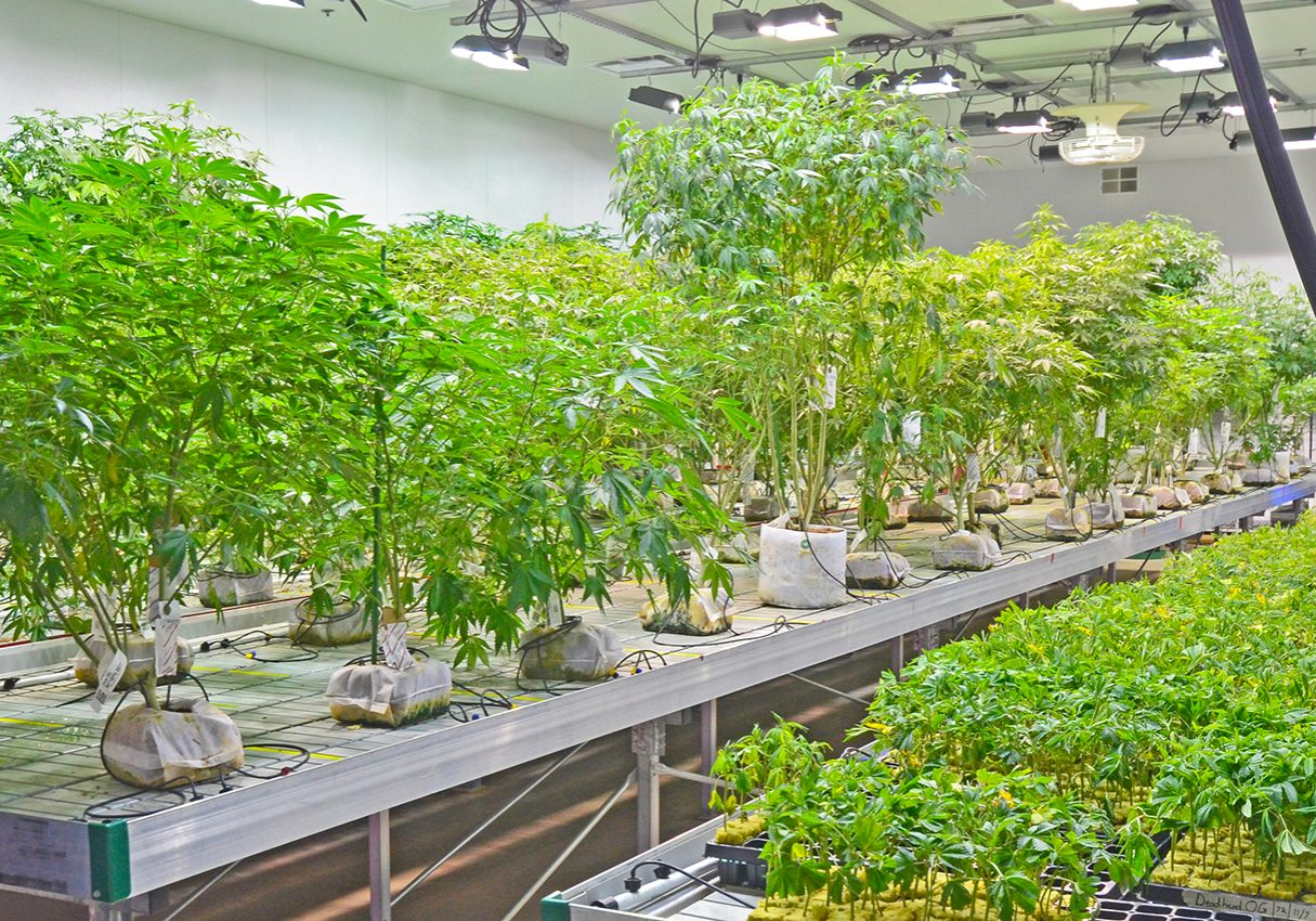 Ilera-Healthcare-Grow-Facility-PA-12